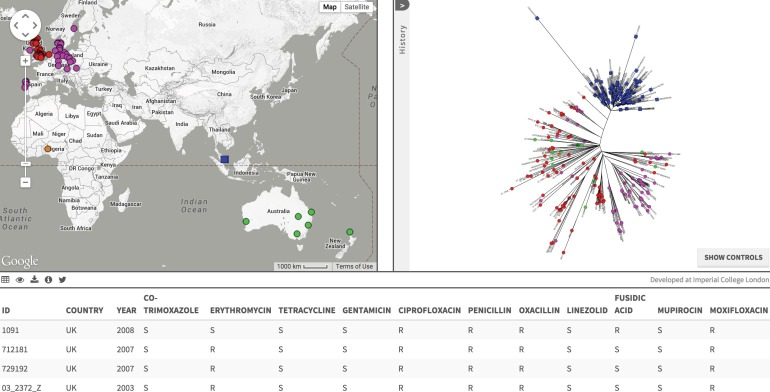 Screen capture of Singapore ST22-MRSA-IV data on Microcreact