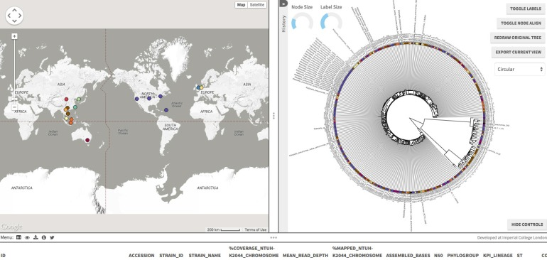 Screen capture from the Microreact site, detailing the Klebsiella pneumoniae project.